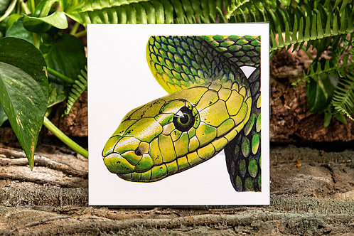Green Mamba Small 5.5x5.5 Square Print