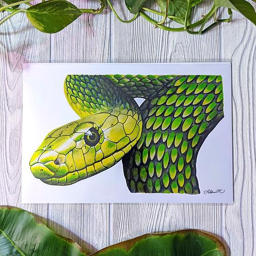 Green Mamba Metallic Medium 8x12 Print