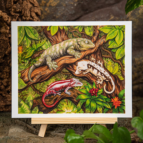 New Caledonian Trio 8x10 Print