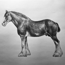 Redraw Clydesdale