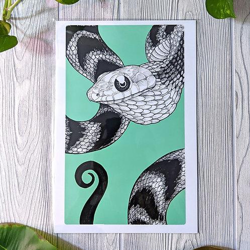 Spilotes sulphureus Medium 8x12 Print