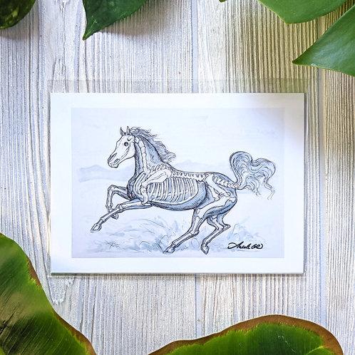 Horse Skeleton 5x7 Print