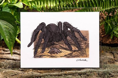Tarantula and Frog Small 5x7 Print
