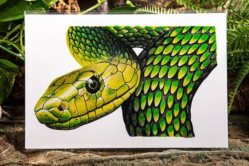 Green Mamba Metallic Small 5x7 Print