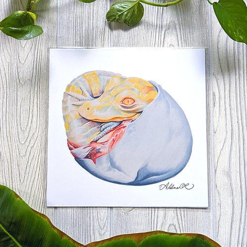 Albino Alligator 10x10 Large Square Print