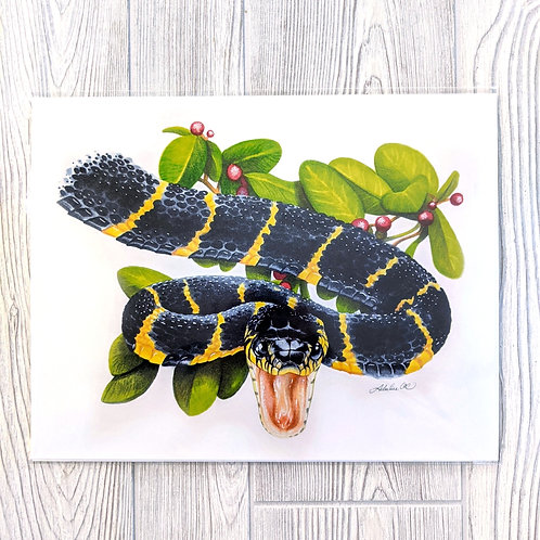 Mangrove Snake 11x14 Print -seconds-