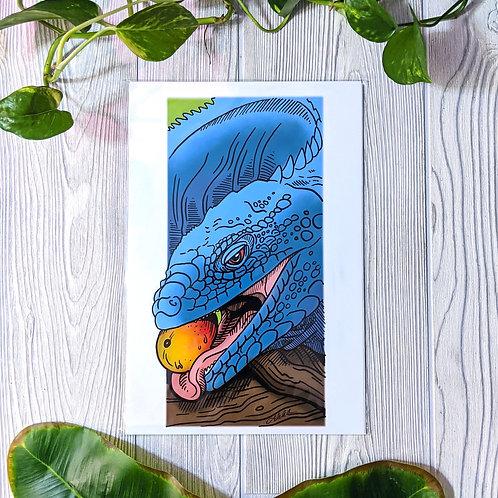 Grand Cayman Blue Iguana Medium 8x12 Print