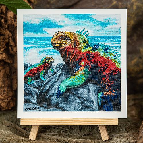 Galapagos Iguana Medium 8x8 Square Print