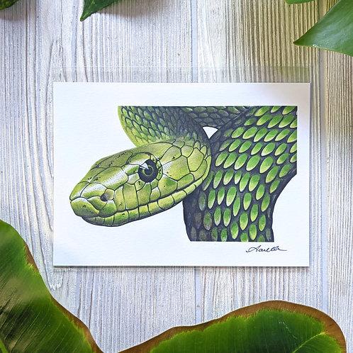 Green Mamba Small 5x7 Print