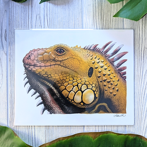 Yellow Iguana Medium 8x10 Print