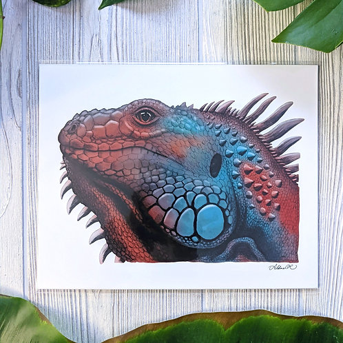 Red & Blue Iguana Medium 8x10 Print