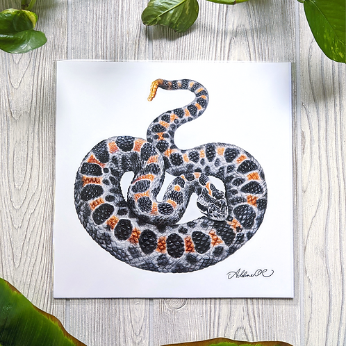 Pygmy Rattlesnake Large 10x10 Square Print