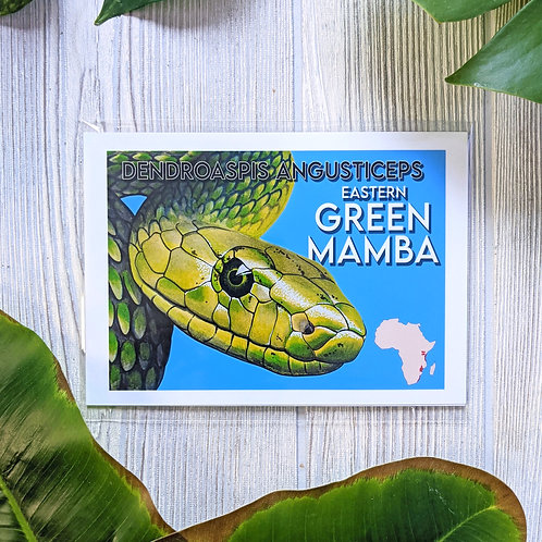 Green Mamba Information Small 5x7 Print