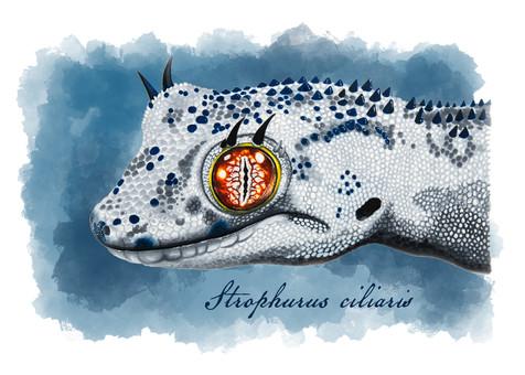 Strophurus williamsi