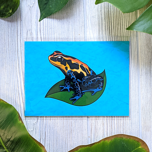 Dart Frog Small 5x7 Print