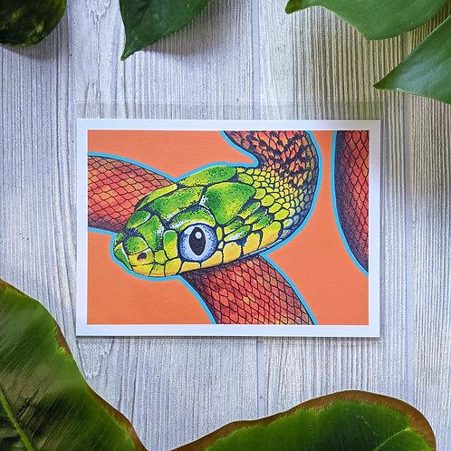 Boiga cyanea Orange Small 5x7 Print