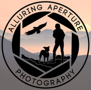 Alluring Aperture Photography
