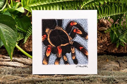 Red Knee Tarantula Small 5.5x5.5 Square Print