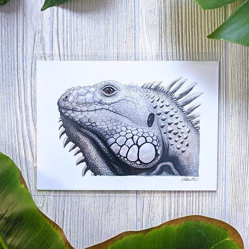 White Iguana Small 5x7 Print