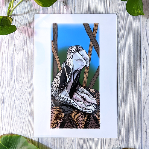 Gaboon Viper Medium 8x12 Print