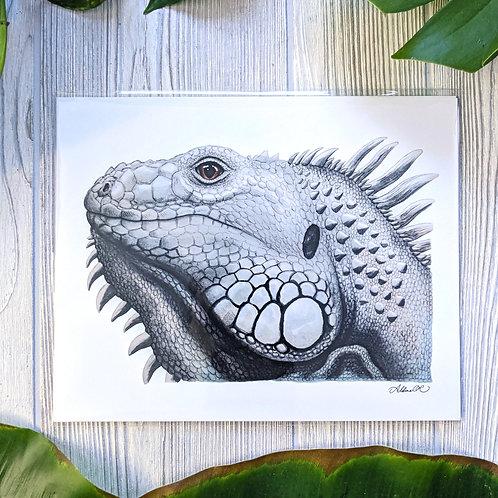 White Iguana Medium 8x10 Print