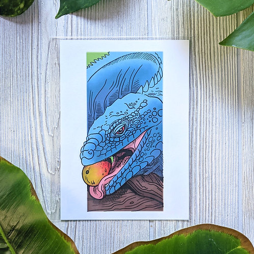Grand Cayman Blue Iguana Small 5x7 Print