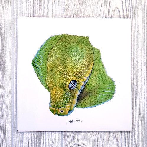 Green Tree Python 8x8 Print