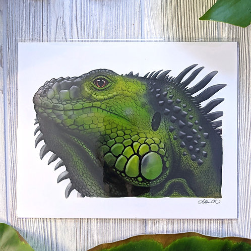 Green Iguana Medium 8x10 Print