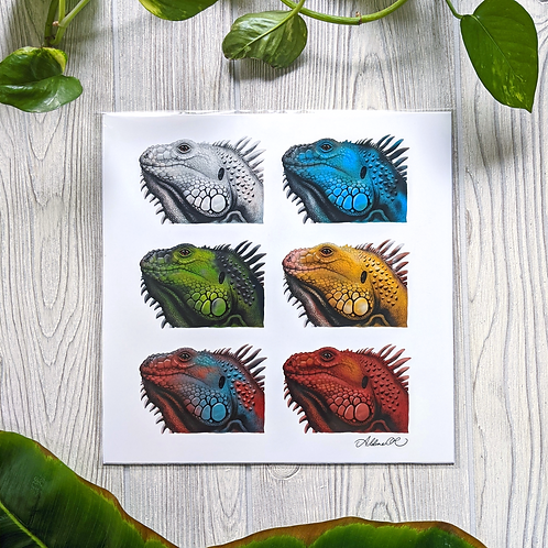 Iguana Color Morphs Large 10x10 Square Print