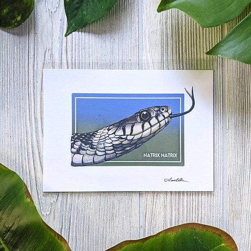 Grass Snake Small 5x7 Print