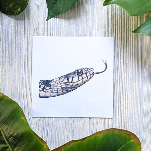 Grass Snake Small 5.5x5.5 Square Print