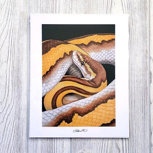 Ball Python 8x10 Print