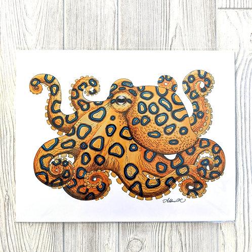 Blue Ringed Octopus 11x14 Print
