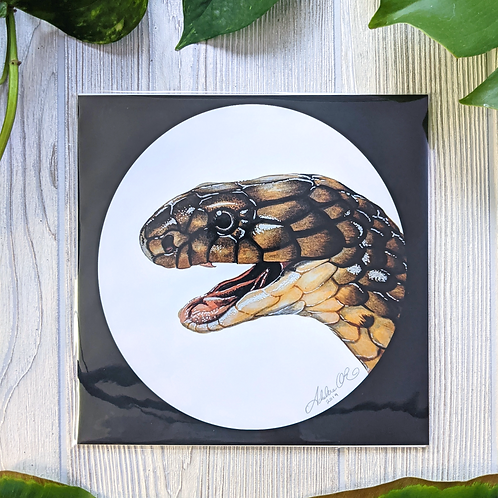 King Cobra Medium 8x8 Square Print