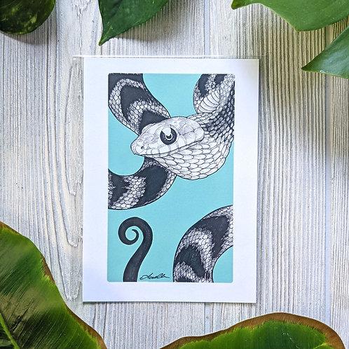 Spilotes sulphureus Small 5x7 Print