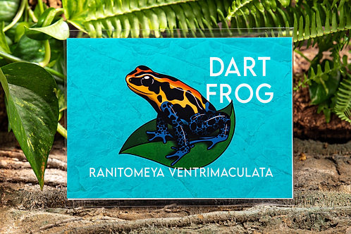 Dart Frog Metallic Small 5x7 Print