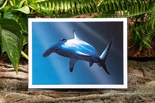 Hammerhead Shark Swimming Small 5x7 Print