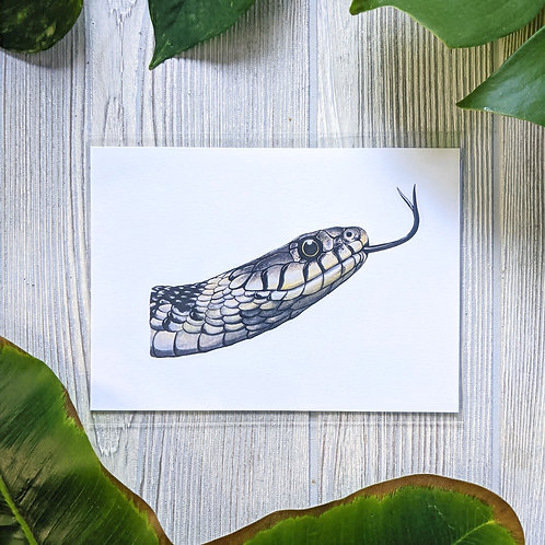Grass Snake on white Small 5x7 Print