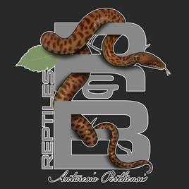 R&B Reptiles python