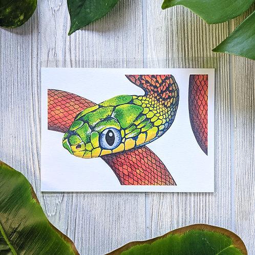 Boiga cyanea Small 5x7 Print