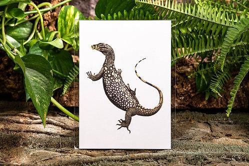 Varanus nuchalis Small 5x7 Print