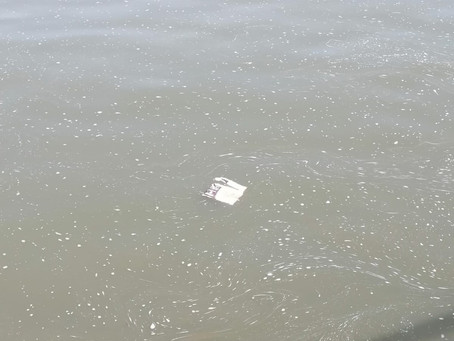 Nettoyons ensemble les bords de Seine