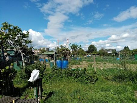 Le désarroi des jardins familiaux Mazagran