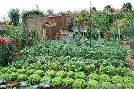 Jardins ouvrier, une interpellation payante à faire respecter