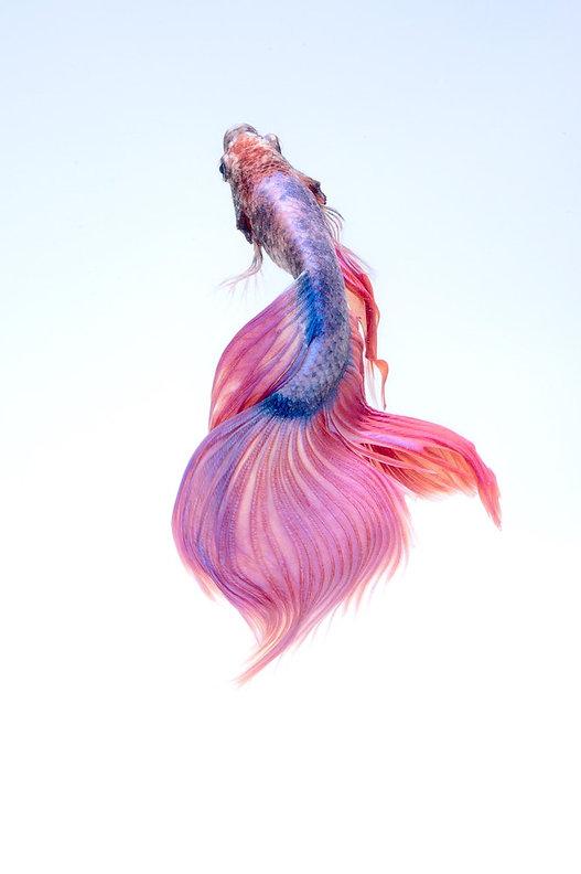 animal-art-beautiful-325045 (1).jpg