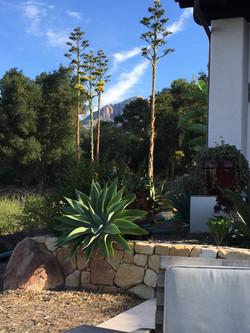 mtn thru agaves