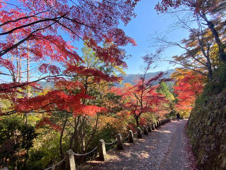 奈良・吉野山ハイキング 2020.11