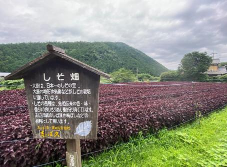 大原・八瀬周辺散策 2020.7