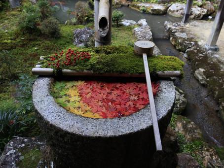 京都西山巡り 2020.11