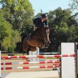 Micheal Kocher Horses